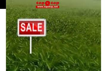 33 ACER Agriculture land for sale 150/9l Harapa Khanewal