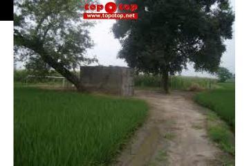 Agricultural Land  Chak No.105/7-R, Near Harappa  Sahiwal.